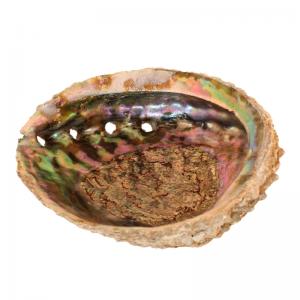 Räuchermuschel-Abalone